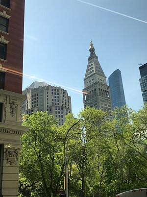 Green tress and tall buildings